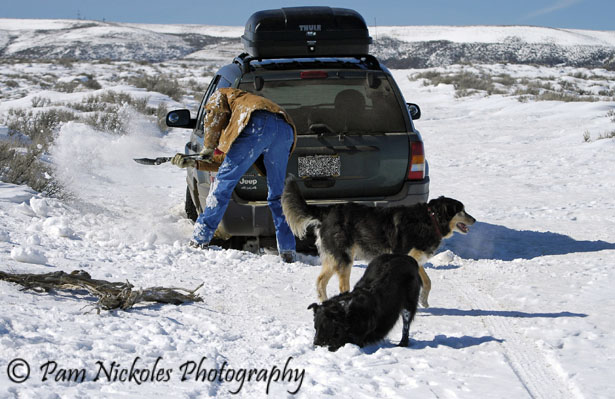 Tom digs out while Brihten and Sage enjoy the wintery playtime. Where's Kaylen - probably at my heels as she's my shadow.