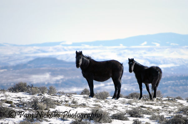 Mare and foal at Adobe Town, WY