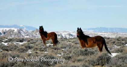 Mare and youngster - Adobe Town, WY