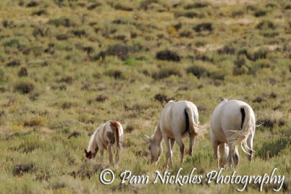 Family portrait - foal, mare and stallion