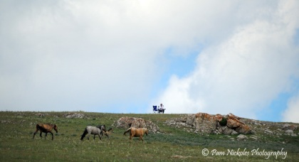 Mom watching Diamond's band go by below her perch - Pryor Mountains, MT