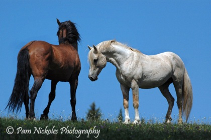 Cloud and band stallion, Prince