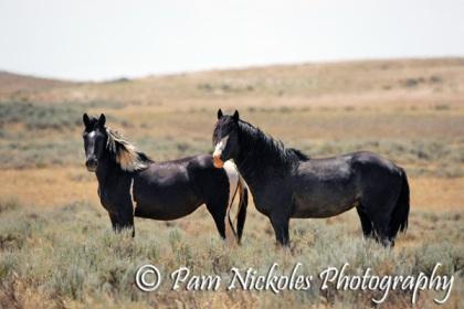 Utah with mare Shakira