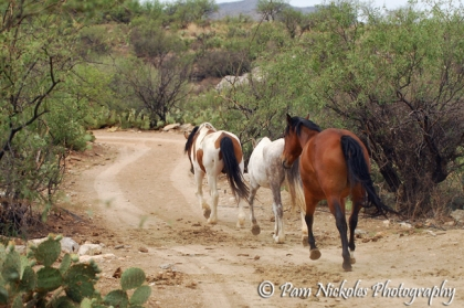 The horses head out to explore the rest of the ranch for the first time with Tomas (who has a crush on Hope) following closely behind.