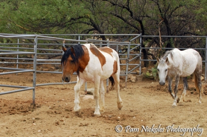 El Mariachi and Hope come in on their own for the comfort of the fan and something to eat.