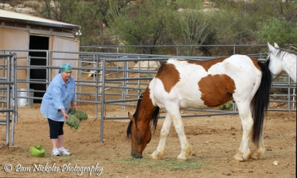 Mom enjoys a real treat by being able to get up close to El Mariachi. People have told me that El Mariachi (who was so elusive in the wild, I could never get very close to him) displays a certain amount of gratitude by allowing himself to be more approachable. He's still wary and will never be asked to more than what he is - a wild horse - but, it's good to know that there a certain few that he will learn to trust. He'll be able to relax and enjoy the rest of his days in as much carefree freedom as possible given he'll never be completely wild again. It's the best we can do when we take wild horses off their range. I believe El Mariachi and Hope will have a wonderful life in their new home.