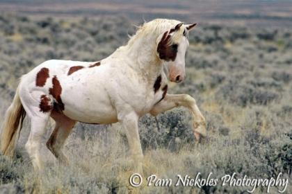 Scrappy little stallion, Hooter