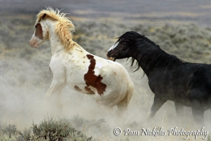 Hooter and the black sabino stallion, Utah