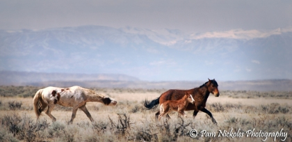 This was the last mare and foal I saw with Hooter as their stallion - 2008
