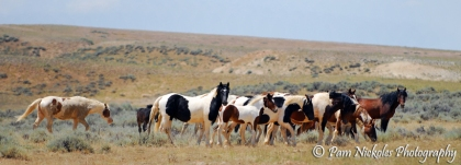 Hooter (far left) with some colorful horses of McCullough Peaks