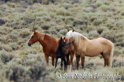 The Palomino colored stallion Corona with family