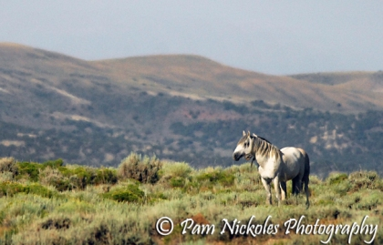 This big grey stallion seemed more seasoned and calm than most of the others. He and his band never left.