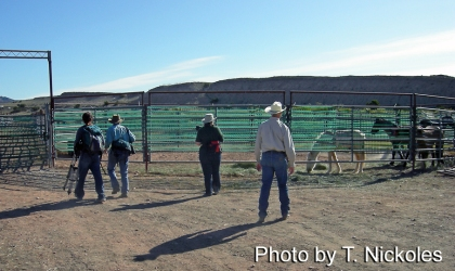 On the way into the corrals, you pass the youngsters - several of Cloud's family are in this pen and available for adoption including Image, Rain, Arrow, Ember, Summer and Sage. From L-R: Ben Susman, Ginger Kathrens, Carol Walker and a BLM representative.