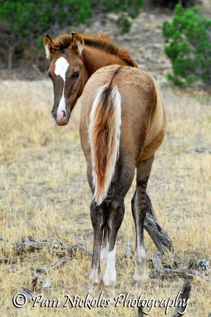 Hildalgo as a foal