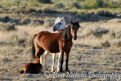 This family was just off the highway in that wonderful late afternoon light.