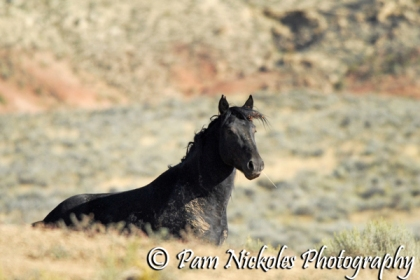 This stallion popped up out of a waterhole area we were checking out