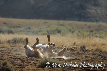 And a young mare that was part of the family enjoying a good roll