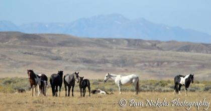 Utah, facing away, and his family
