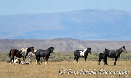 Utah - third standing horse from the left - and his family