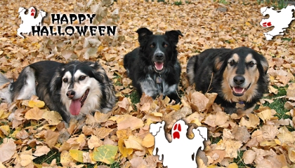 HalloweenDogs-mod