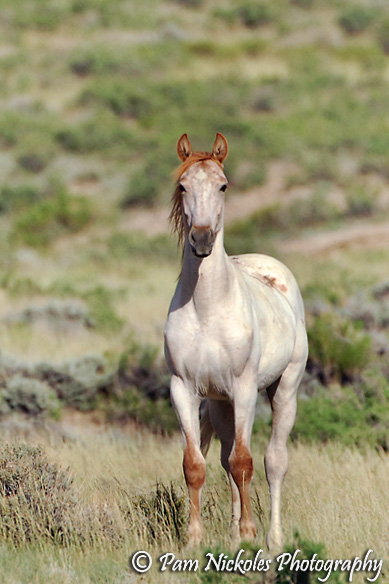Strawberry Roan Horse - photo#42