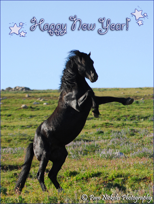 wishing you all the very best for a happy new year 2011