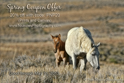 SpringCouponOffer-s