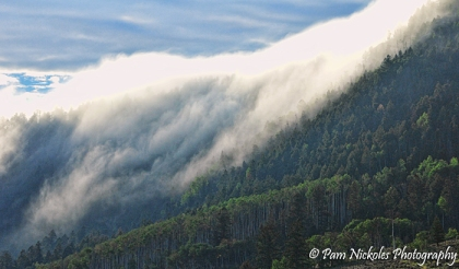 Love the fog topping the trees.