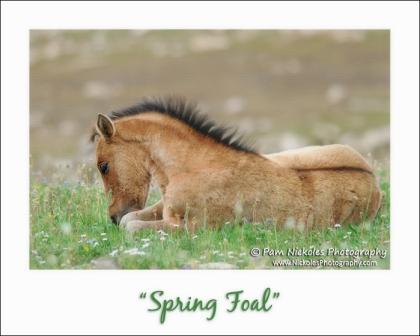 SpringFoal-FB-s